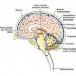 puncion cerebral negligencia medica www.vazquezabogados.es