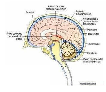Condena Negligencia Medica Puncion Cerebral